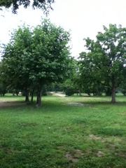 20110619-165156.jpg