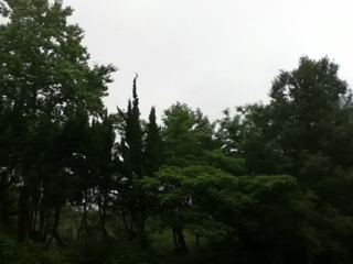 20110619-165205.jpg